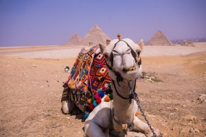 The Pyramids of Giza Egypt - Why You Need To Visit NOW #egypt #cairo #pyramids