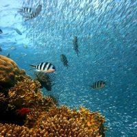 Dive+ : We Love Ocean