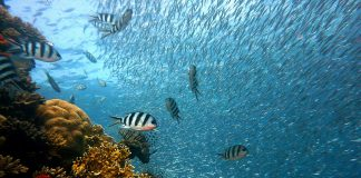 Red Sea Snorkeling and Diving
