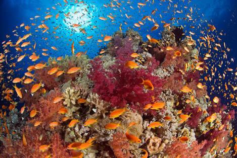 Scuba Diving in Dahab, Egypt