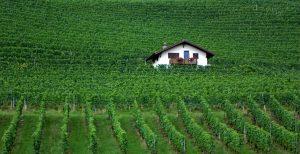 11 Fun & Interesting Facts About Switzerland