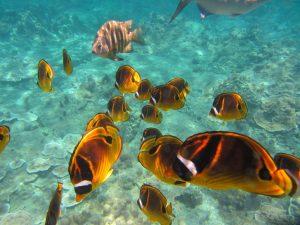 Bimini Island - Best Snorkeling in Bahamas