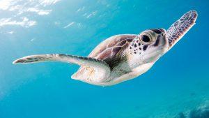 Grand Bahama Island - Best Snorkeling in Bahamas
