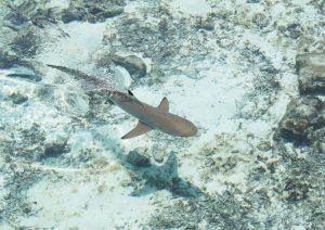 Long Island - Best Snorkeling in Bahamas