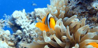 Scuba Diving Guide Sharm El-Sheikh
