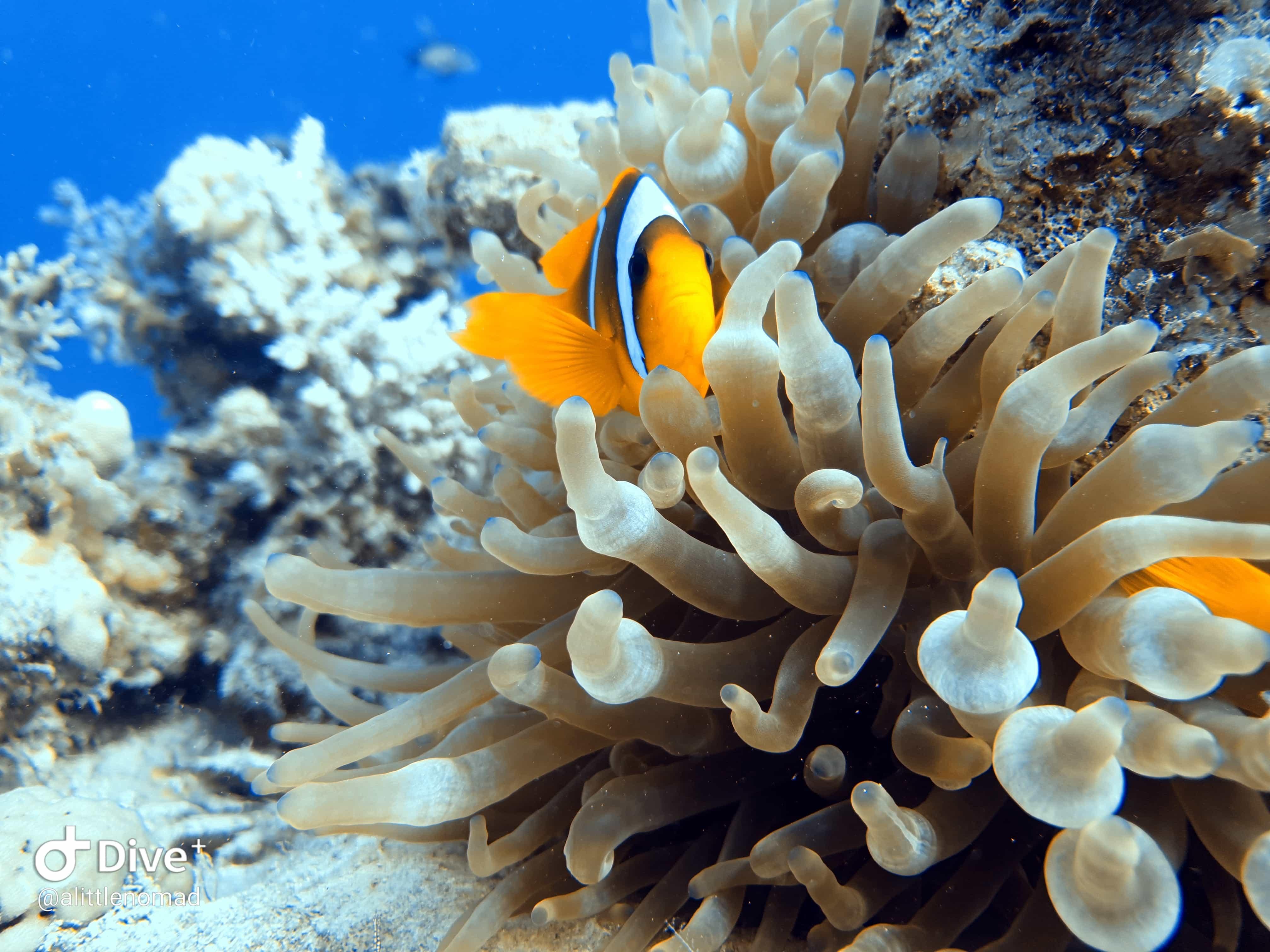 Sharm-el-Sheikh - Diving Guide