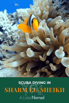 Scuba Diving Sharm El-Sheikh Guide
