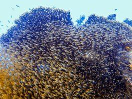 El Gouna Diving Guide