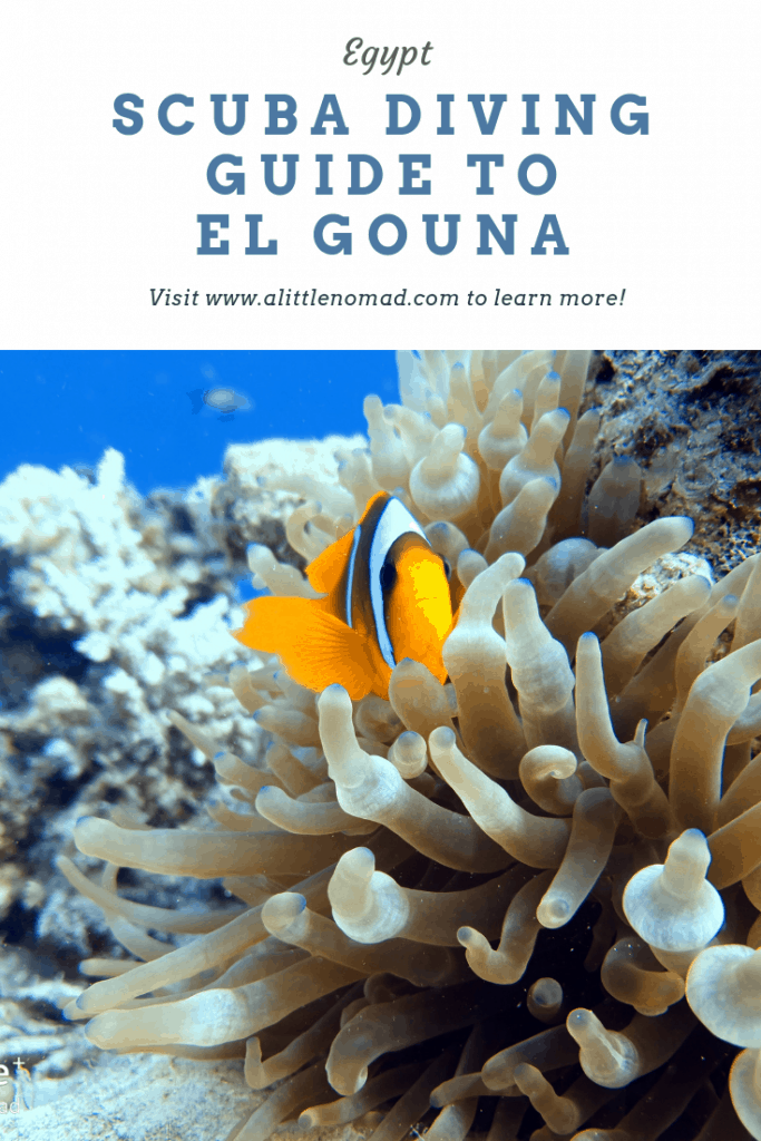 Everything you need to know about El Gouna Diving: Best Dive Sites, Best Season for Scuba Diving in El Gouna, Dive Centre Recommendation etc.